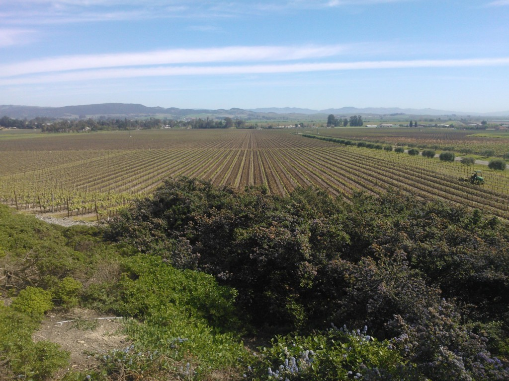 Gloria Ferrer Vineyards