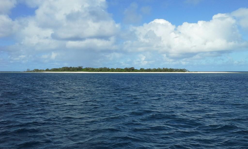 kauore island shark attack